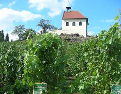 Komerční prezentace:Praha je městem vinic