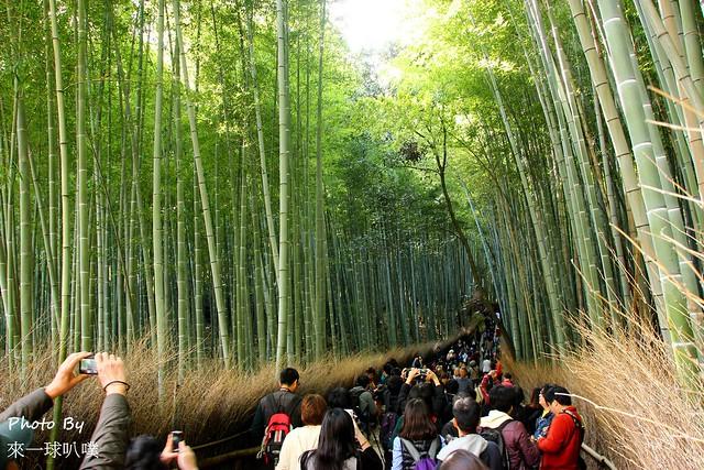 日本京都-竹林小徑_野宮神社18