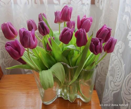 Huhtikuun tulppaanit by Anna Amnell
