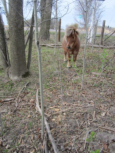 Hoss in the Woods