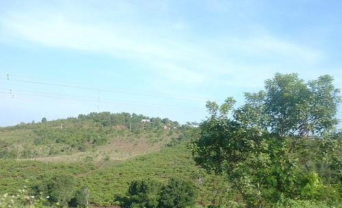 V-Route Buon Ma Thuot-Pleiku (7)
