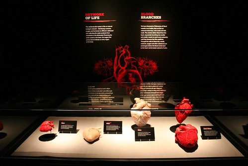Specimen displays