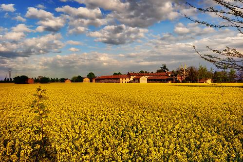 Golden Fields [Explore]