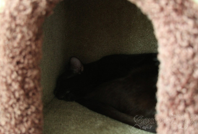 Ellie Napping in Cat House