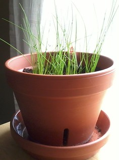 05-02-2012 Chives