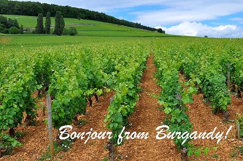 Burgandy Postcard