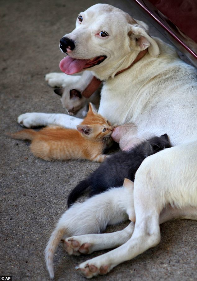 Elbert Bristow dog mothers 4 kittens