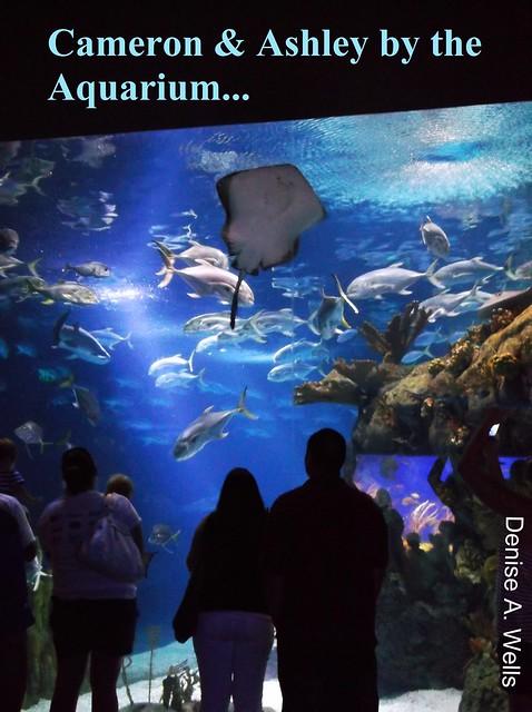C Ash Cam N Ash At The Shark Tunnel Aquarium Omaha Ne