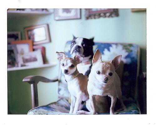 dogs 7-11 by EllenJo