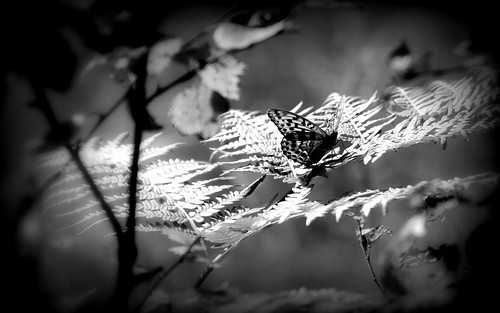 "#photo #butterfly ""I had to test the beauty in b/w Hola"" #nature #hiking by @heidenstrom"