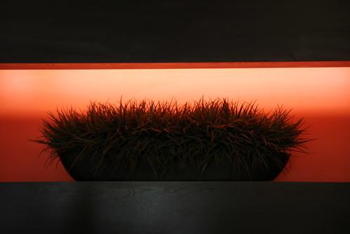 light stilllife orange white plant green art marriott canon ga silver hotel courtyard athens frontdesk 60d
