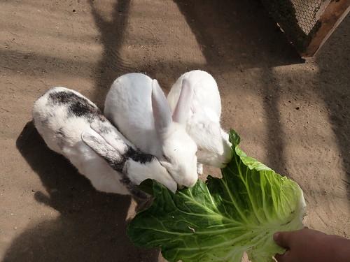 ウサギさんモグモグタイム