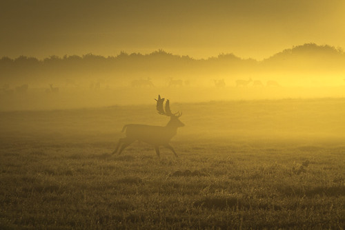 Deer running in fog