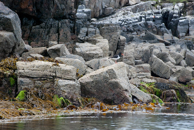 There's a wide variety of coastal birds which live on and around the islands - Trip to the Outer Hebrides