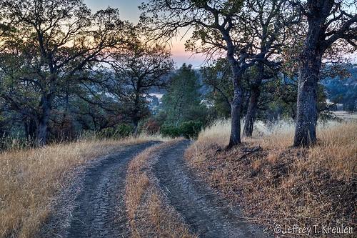 california road ranch nature pine sunrise landscape oak arbuckle oat sacramentovalley colusacounty