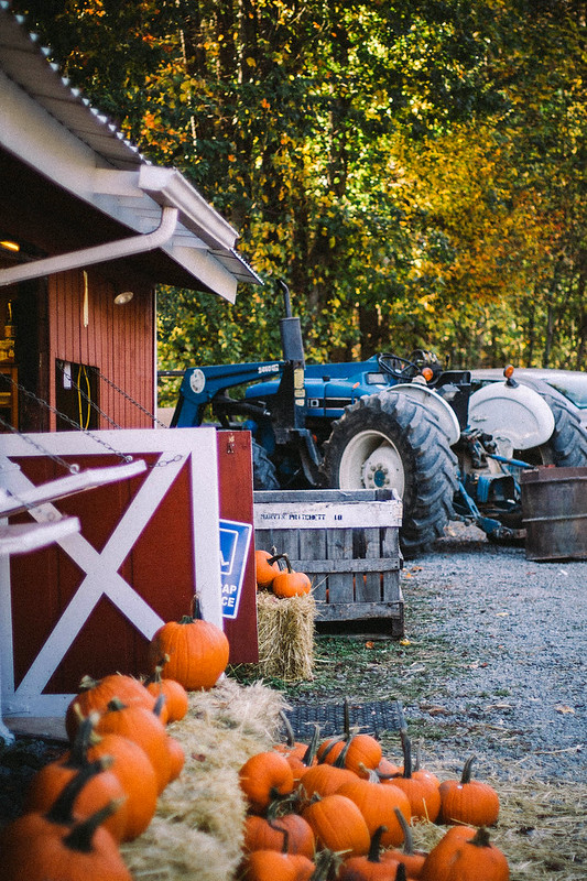 pumpkins, tractor, and barn