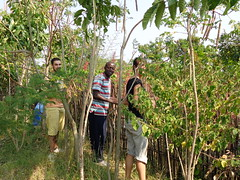 Kenya permaculture project