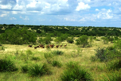 View of Ranch and Wildlife