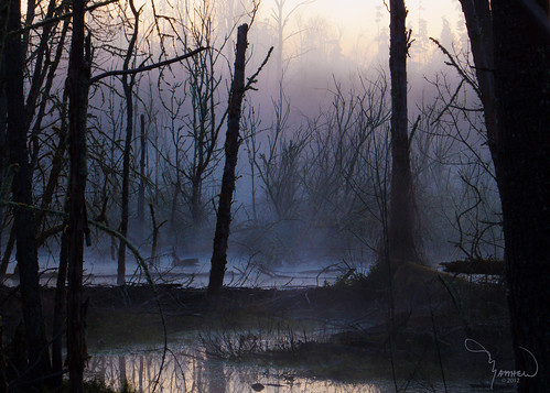 trees mist nature water silhouette fog canon landscape washingtonstate t1i matthewreichel