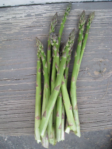 first asparagus crop
