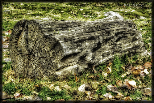 Lincoln Log