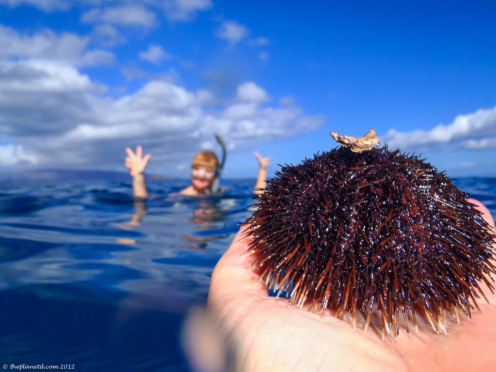 travel photo of sea urchin with adventure couple