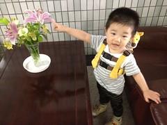 お花が好きなとらちゃん (2012/7/3)