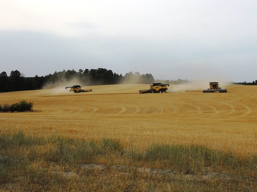 3 combines cutting near Chadron