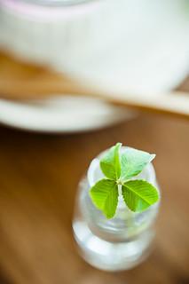 four-leaf clover_四葉のクローバー