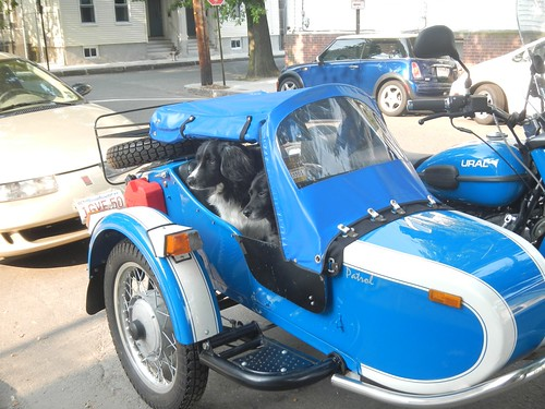 Dogs in Sidecars – Corporate Runaways