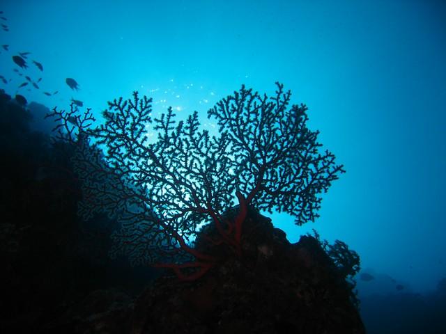 Ariara Island 0066