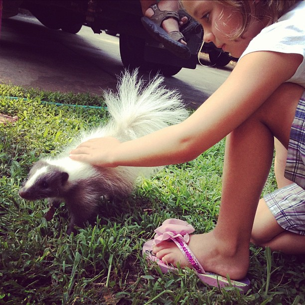 Pet skunk for the zoo?