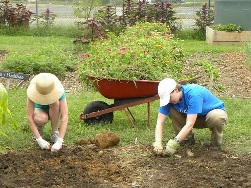 Walker-Jones Urban Farm July 22, 2012