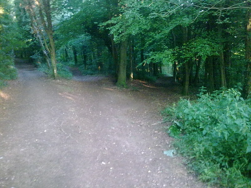 Randwick Woods Near Haresfield Beacon