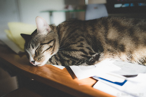 Sleeping by Nelson Vargas Photography, Flikr