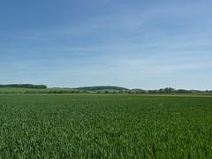 C'est vert - Photo of Barenton-sur-Serre