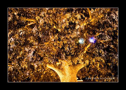 Tree of Prosperity at Wynn Macau