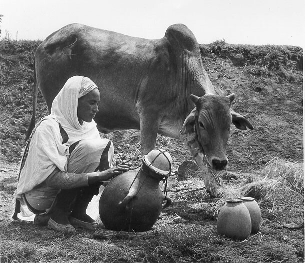 Ethiopia woman churning butter