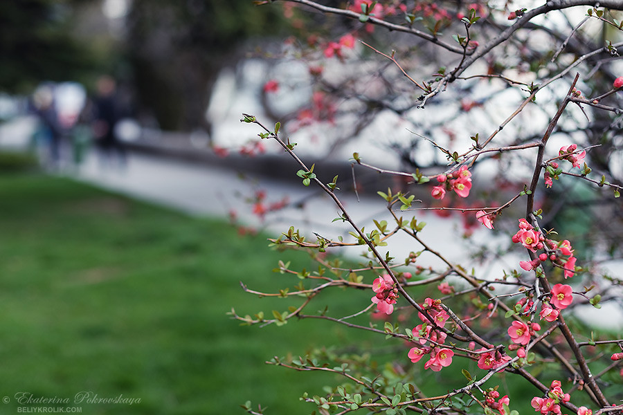 Yalta_spring_14