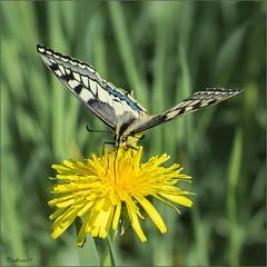 Les Insectes - Macro-photographie
