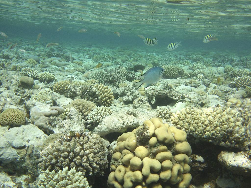 أسماك البحر الأحمر Red Sea fish