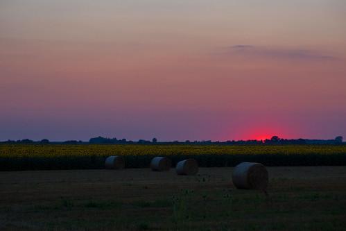sunset field straw sunflower olympusxz2