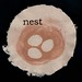 Amanda Gordon Miller: Nest