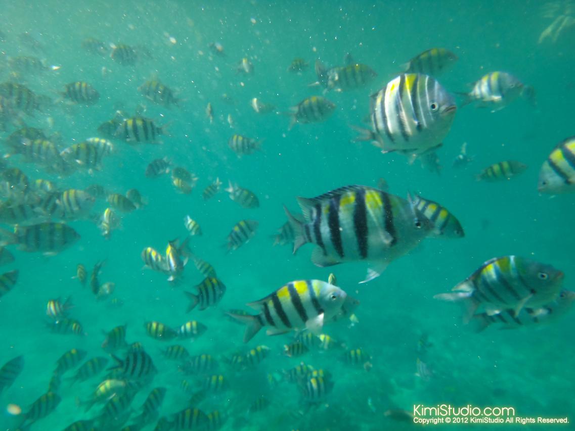 2012.04.19 Philippines-Cebu-Caohagan Island-149