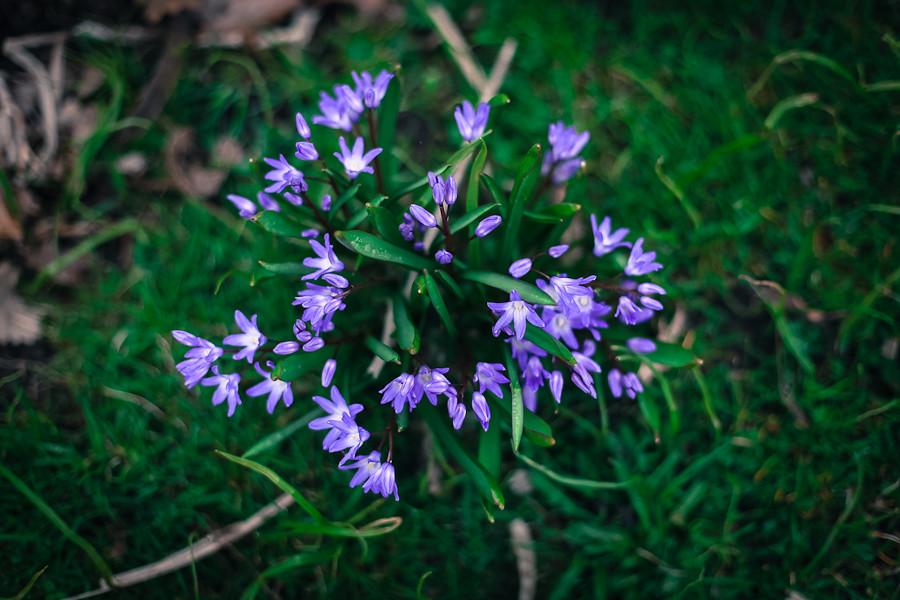 Spring 06