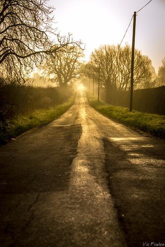 morning trees mist sunrise flickr