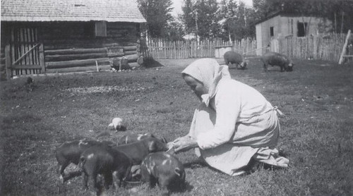 Great Grandma Mary tending piglets, 1928.