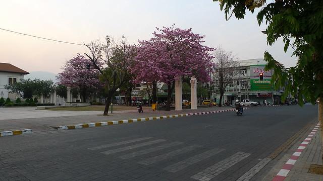 Cherry Blossoms?