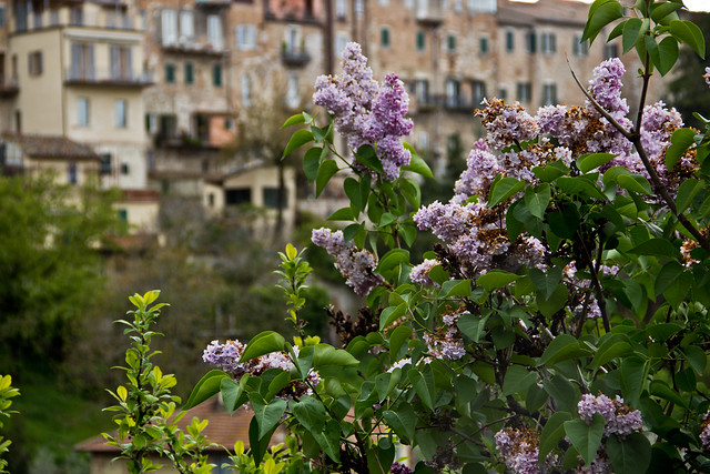 Perugia in Bloom