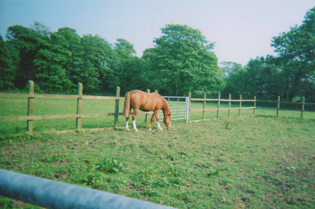 disposable photograph eight